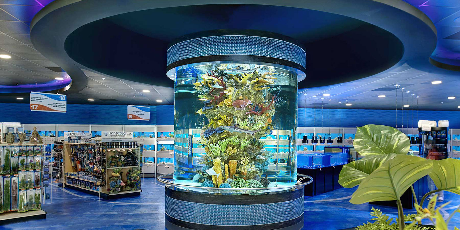 Albany plattsburgh glens falls saratoga custom aquarium for Salt water fish store