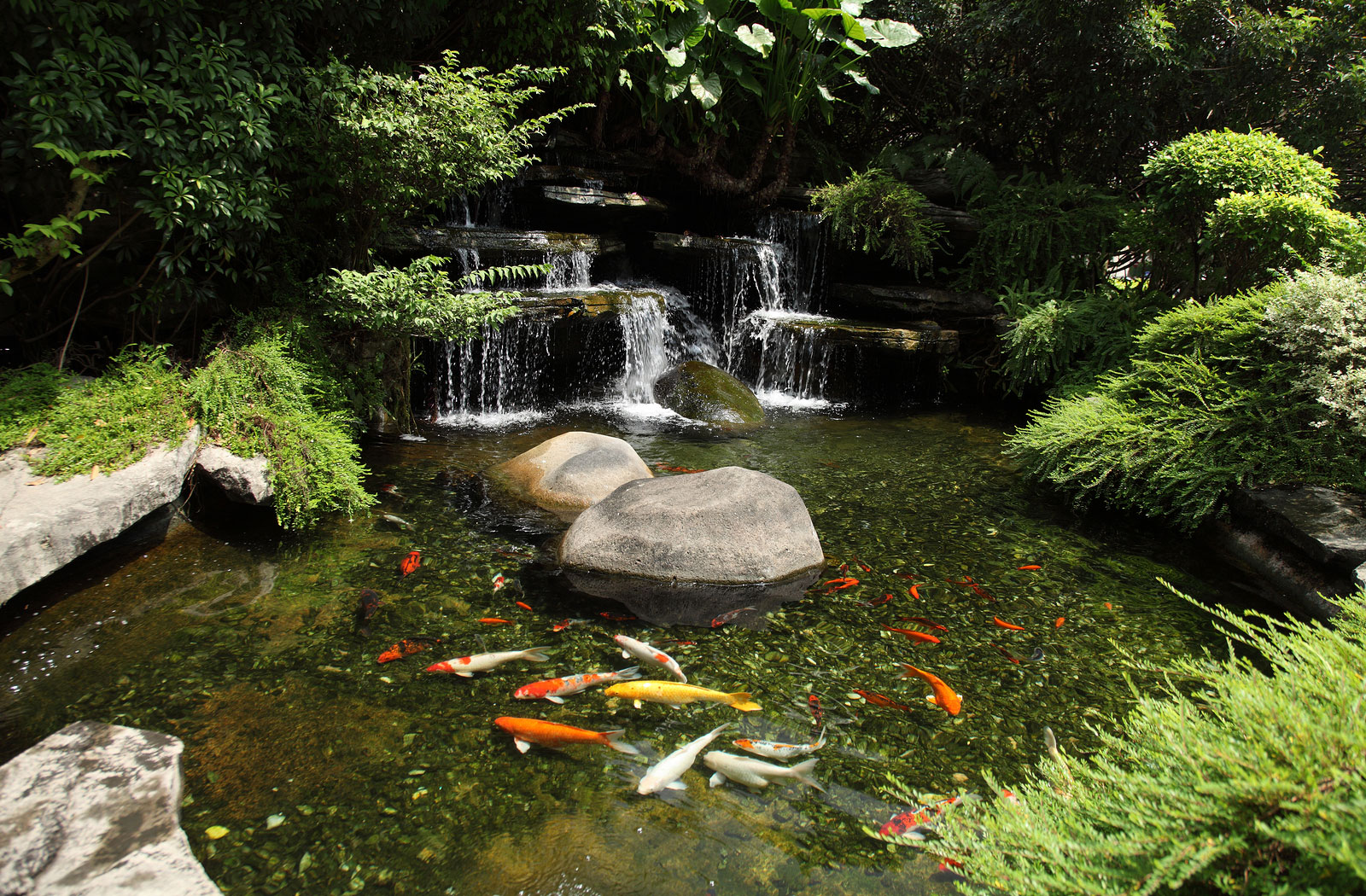water garden customed designed water garden and koi pond koi pond